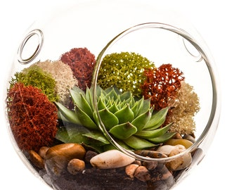"Succulent Terrarium with Moss and River Rocks / 4"" Round or 7"" Teardrop Glass"