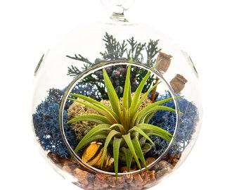 Air Plant Terrarium Kit with Gold Hematite, Juniper & Moss / Juniper Forest