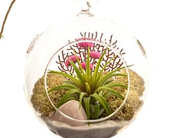 Air Plant Terrarium with Rose Quartz / Teardrop or Round / Pretty Pink Countryside