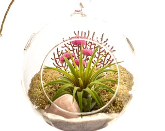 Air Plant Terrarium Kit with Pink Rose Quartz / Tillandsia DIY Gift / Pretty Pink Countryside