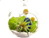 Air Plant Terrarium Kit with Blue Agate Slice Surf 39 s Up
