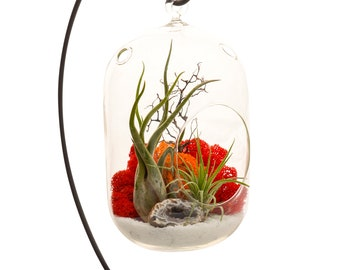 """Air Plant Terrarium with 8"""" Oval Glass and Geode Crystal / DIY Tillandsia Gift / Sunburst On Ice"""