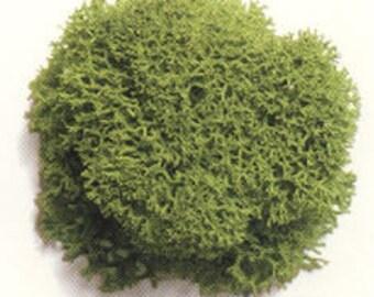 Reindeer Moss, Light Green, 2oz  -OR-  8oz  / Free Shipping