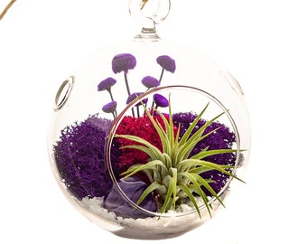 Air Plant Terrarium with Moss, Flowers and Purple Agate / Purple Passion
