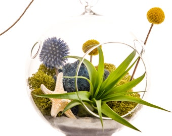 """Air Plant Terrarium with Starfish, Moss, Blue Thistle, Yellow Billy Buttons / 5"""" Glass / Deep Blue Sea"""