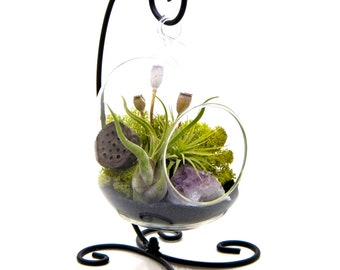 """Air Plant Terrarium Stand with Purple Amethyst / 6"""" Oval Glass / Midnight Forest"""