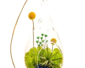 Air Plant Terrarium with Moss, Flowers, Rocks, Green Amethyst / Wonky Wonderland
