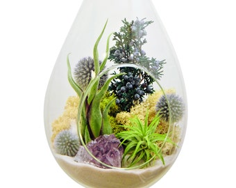 "Large Hanging Air Plant Terrarium with Amethyst Crystal / 13"" Teardrop Shabby Chic"