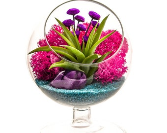 "Air Plant Terrarium with Purple Agate / 4"" Round Glass Pedestal / Turquoise Passion"