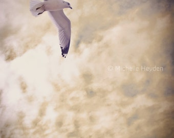 "Fine Art Photography Print- 19"" x 13""- Seagulls Flying in the Clouds- ""Flying"""