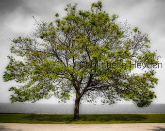 "Fine Art Photographic Print on Metallic Paper- 8"" x 10""- ""Renewal""- Spring Tree"