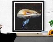 mushroom photography prin...