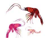 shrimp art print / endang...