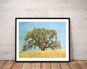 tree photography/ nature ...