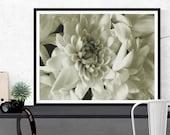 flower photography /  nat...