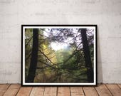 nature photography print ...