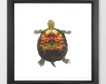"""turtle art print / animal nature endangered species illustration art print / green brown large square wall art / """"Pacific Pond Turtle"""""""
