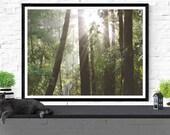forest photography / natu...