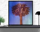 palm tree photography / C...