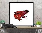 frog art print, animal am...