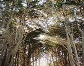 tree photography print, c...