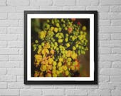 floral photography print ...
