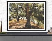 tree photography print / ...