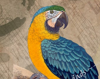 Blue and Gold Macaw 5X7 Digital Download Wall Art