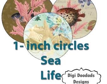 One Inch Circles Sea Life Shells Fish Seahorse