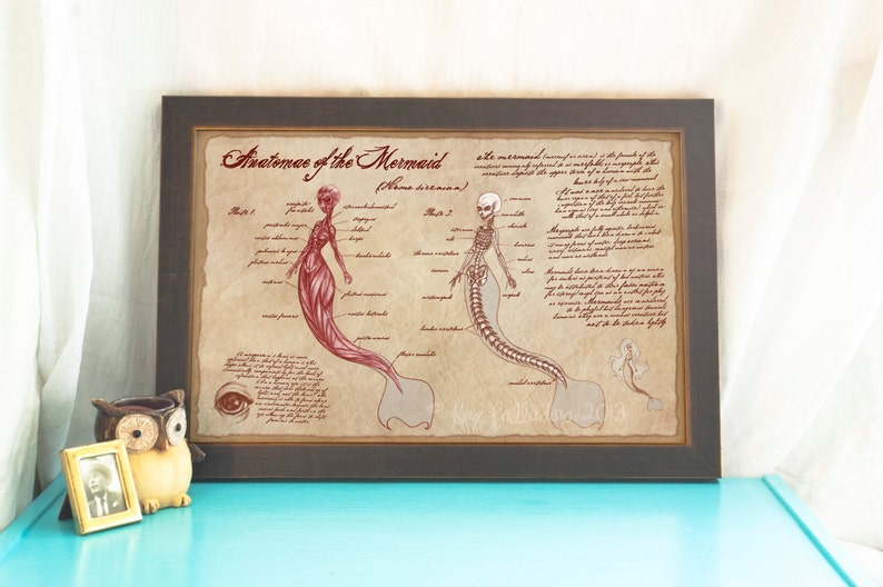 Anatomy Of The Mermaid Print Scientific Illustration Etsy