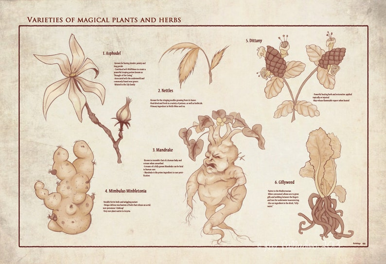 Herbology Studies Botanical Chart Print // Magical Plants & Herbs Print //  Vintage Illustrated Botanical Art // Geeky Home Decor //Art Print
