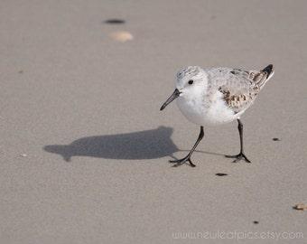Beach Wall Art, Bird Photography, Black White Gray Coastal Decor, Cute Bird Photo, Seashore Print, Shorebird Photograph, Bird on the Sand