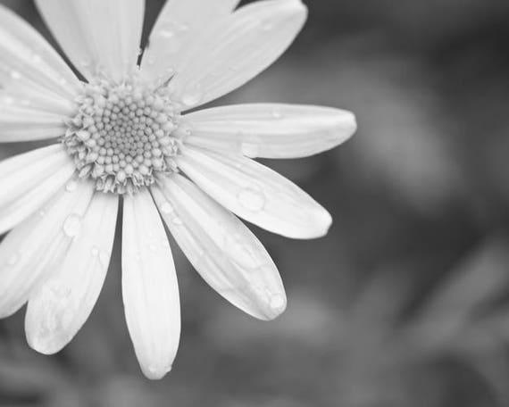 Black and white flower photo bw daisy wall art minimalist etsy image 0 mightylinksfo