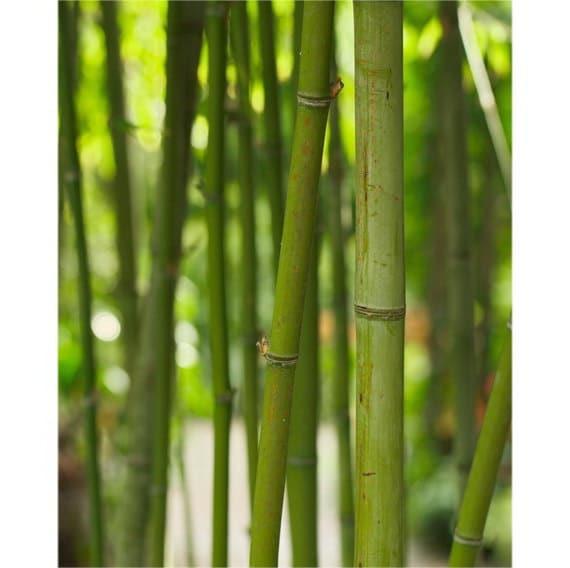 Bamboo photograph Japanese Wall Art Zen Decor Office Wall | Etsy