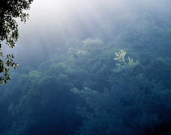 Faint Mist by Catherine Roché, Sunrise Landscape Photography, Magical Nature Photography, Misty Woodland Photography, Fine Art