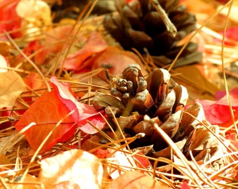 Autumn Forest Floor by Catherine Roché, Nature Photography, Autumn Photography, Autumn Foliage, Autumn Leaves, Pine Cones, Fine Art