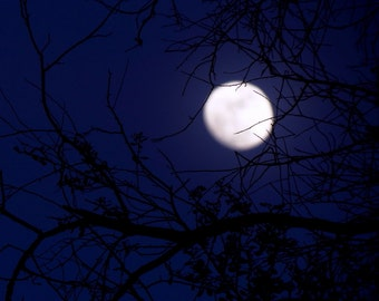 Entangled Moon by Catherine Roché, Astronomy, Tree Photography, Moon Photography, Landscape Photography, Night Sky Photography, Fine Art