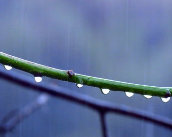 Raindrops by Catherine Roché, Autumn Nature Photography, Raindrops Photography, Rain Photography, Minimalist Photography, Fine Art