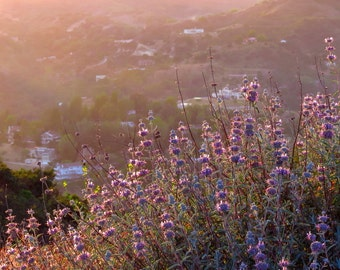 Hazy May Evening by Catherine Roché, California Landscape Photography, Nature Photography, Flower Photography, Spring Photography, Fine Art