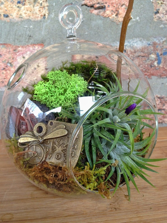 A Perfect Birthday or Fathers Day Gift Steampunk Air Plant and Moss Terrarium