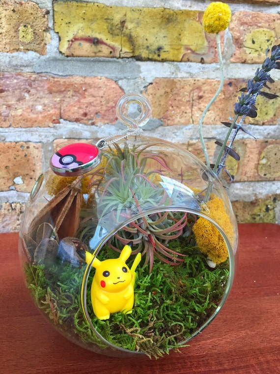 Gotta Catch M All Pokemon Air Plant Terrarium A Unique Etsy
