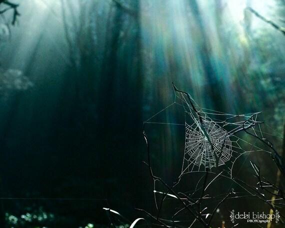Pajęczyna W Ciemnym Lesie Przyroda Artystyczna Druk Promienie Etsy