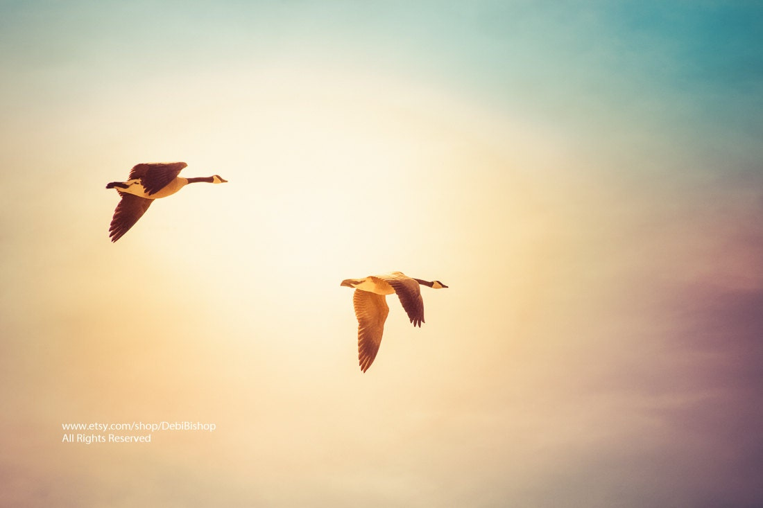 Flying Home Two Canadian Geese Flying A Dreamy Sunshine Sky | Etsy