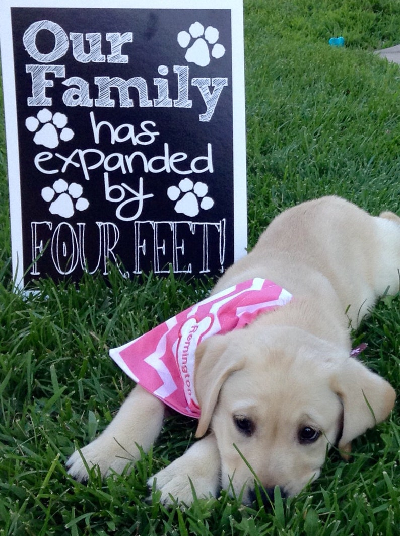 New Puppy Announcement Our Family Has Expanded By Four Feet Etsy