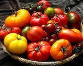 Giant Heirloom Tomato Collection, 120 seeds, Black Krim, Purple Calabash, Sudduth 39 s Strain, etc. organic non GMO