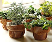 Windowsill Herb Garden Collection, six spices, 1000 seeds, easy indoors, great hostess gift, Sage, Parsley, Thyme, and more