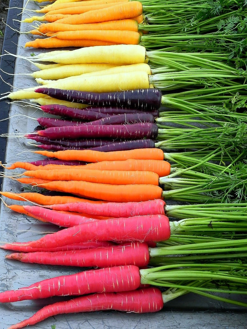Rainbow Carrot Mix  seven fancy heirlooms 350 seeds spring image 0