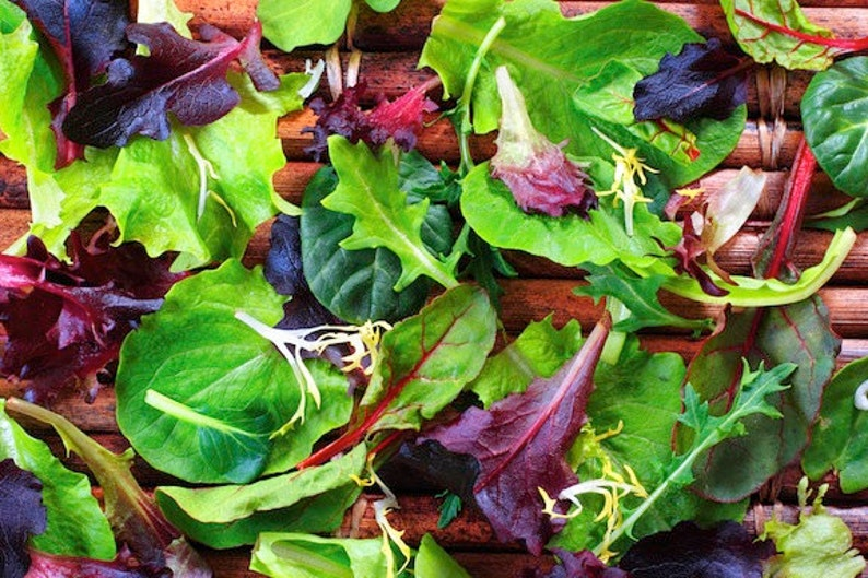 Spicy Mesclun Mix, Summer Baby Greens, 2000 bulk seeds, non GMO, 15 colorful heirlooms, loves warm weather, zippy flavors, container garden photo