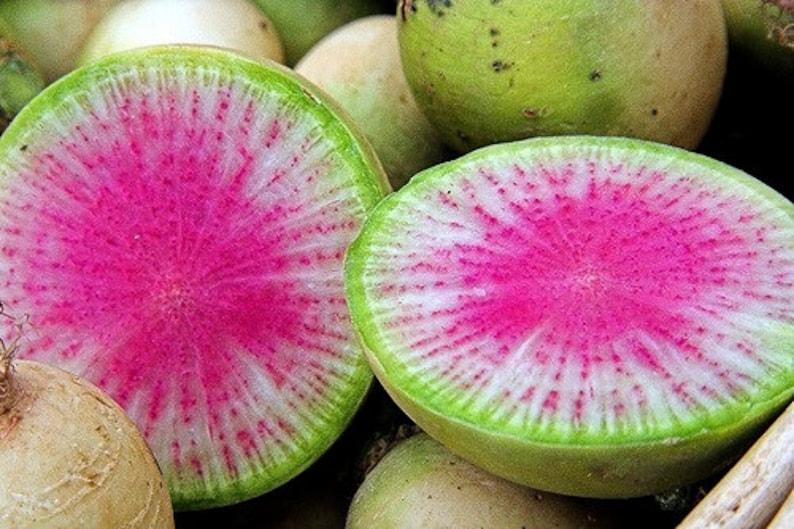 Watermelon Radish, 25 seeds, Asian heirloom, bright pink center, cool weather crop, sweet mild flavor, gourmet garnish photo