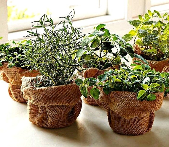 68b17b93392 Windowsill Herb Garden Collection six spices 1000 seeds | Etsy